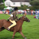Show jumping horses